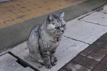 111126kagoshima1.JPG
